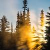 30  G Morning Sun Rays V