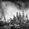 67  G Morning Fog Trees BW