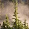 62  G Morning Fog Trees V