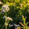 58  G White Flower