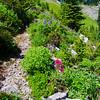 358  G Flowers Along Trail V