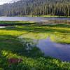11  G Mt  Rainier and Reflection Lakes Deer V