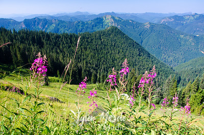 206  G Fireweed and View