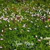 276  G Wildflowers