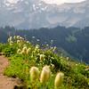 801  G Golden Gate Trail Flowers View V