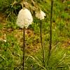739  G Bear Grass V