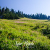 157  G Fireweed Meadows