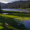 14  G Mt  Rainier and Reflection Lakes Deer V