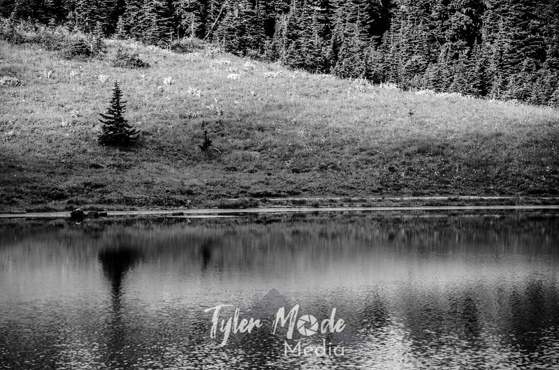 138  G Tree and Tipsoo Lake Sharp BW