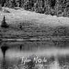 138  G Tree and Tipsoo Lake Sharp BW