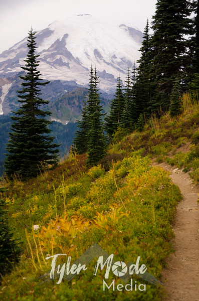 231  G Rainier and Trail V