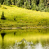 137  G Tree and Tipsoo Lake Sharp