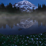 Avalanche Lily at Mount Rainier, Spray Park