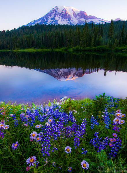 Wildflowers at Reflection Lake, Mt Rainier