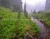 A Scene Along The Trail
