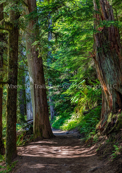 159.  Hiking The Forest Trail