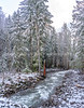 A Winter Day Along A Nameless Creek