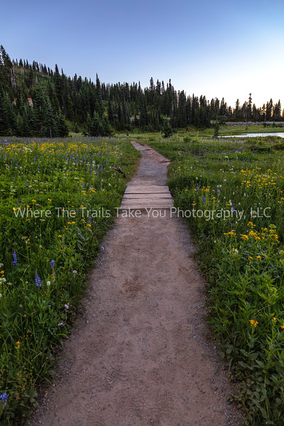 207. The Flower-Lined Trail At Tipsoo Lake