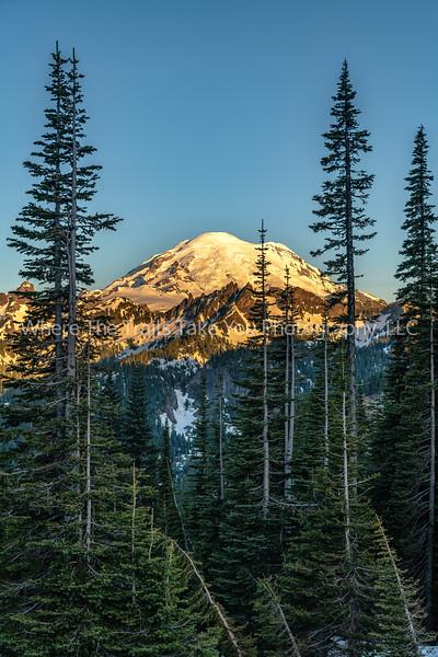 197. Blue Sky, Golden Mountain,  Tall Green Trees
