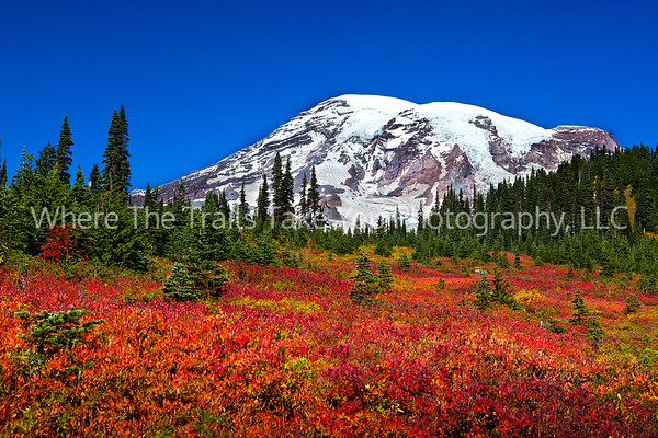 8  Autumn in Paradise, Mt. Rainier National Park, Washington - wide angle