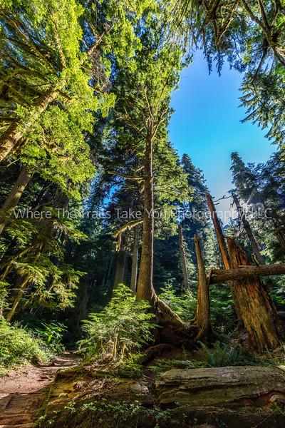 84.  A Walk Along Twin Firs Trail