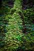 14. Many Shades Of Green On A Nurse Log