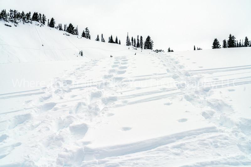 Breaking Trail Through The Snow