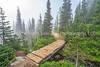 The Bridge Along The Trail