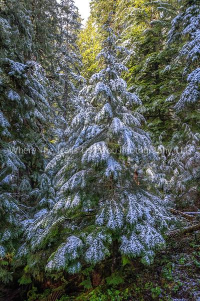 Nature's Christmas Tree