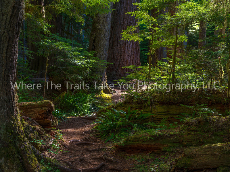 97.  Walking Along The Twin Firs Trail