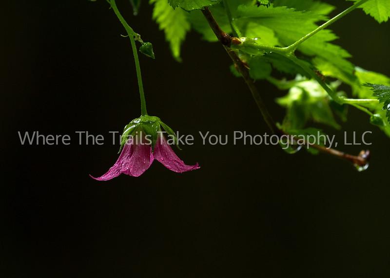 140.  Rain-Dappled Wildflower