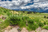 103.  Pasque Flower Meadow