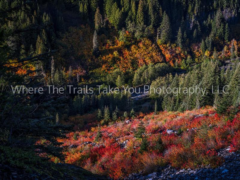Autumn Colors And Stevens Creek