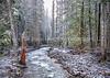 Winter Flow Along A Nameless Creek - Horizontal CROP