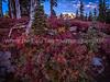Autumn Color Along The Trail