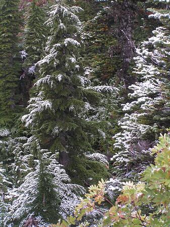 Mazama Ridge 2007 snow