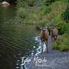 310  G Deer and Reflection Lake