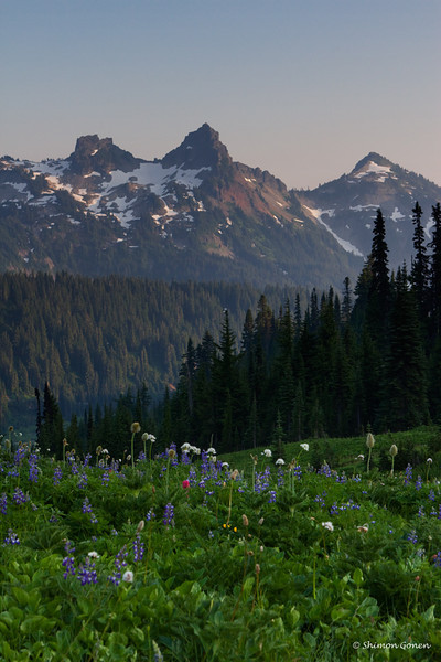 Beginning of the flowers with a view of Tatoosh Mountains