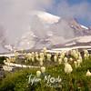 725  G Rainier and Bear Grass