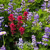 828  G Flowers