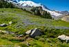 08-2013 Summerland Trail Marmot