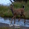 335  G Deer and Reflection Lake