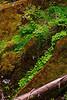 SIlver-Falls-River-3-07-2011