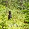 503  G Bear Standing