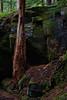 Tree-and-Rock-Mt-Rainier-10-2011