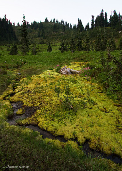 Yellow patch - Mount Rainier Park