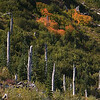 Fall colors and trees snapped by the force of the eruption