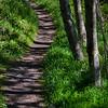 143  G Hummocks Trail V