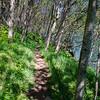 72  G Trail Sun V