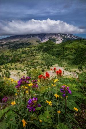 Mt  St  Helens KAR_7942_11693